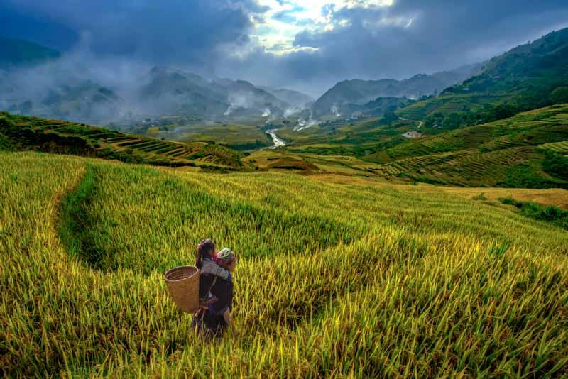 los mejores arrozales de vietnam