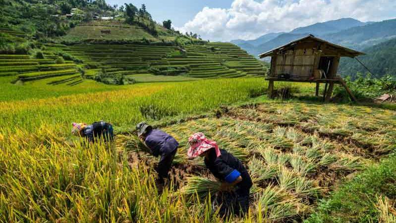 etnias y aldeas en sapa, vietnam