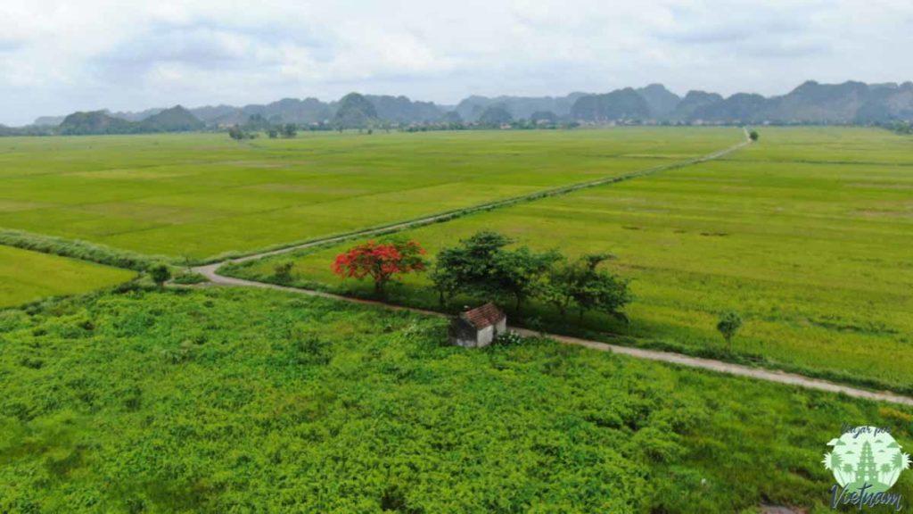 arrozales en tam coc, vietnam, ninh binh