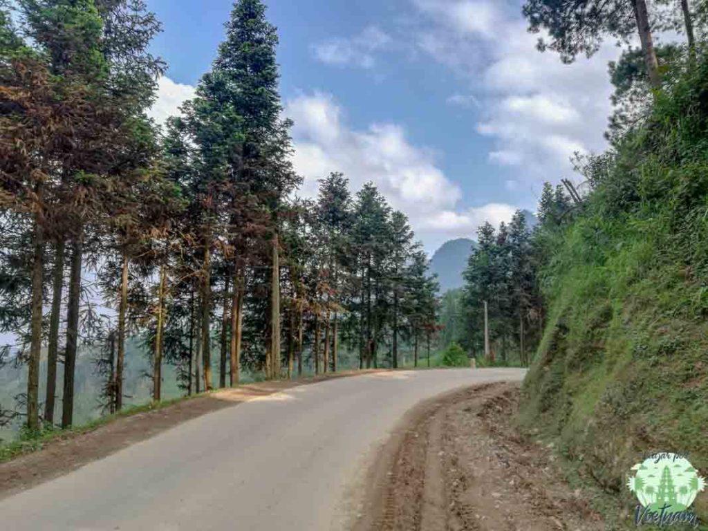 bosque en ha giang loop